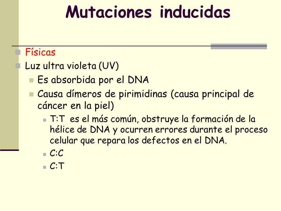 Mutaciones inducidas Físicas Es absorbida por el DNA