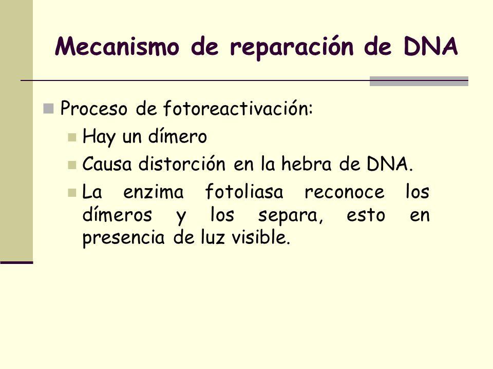 Mecanismo de reparación de DNA