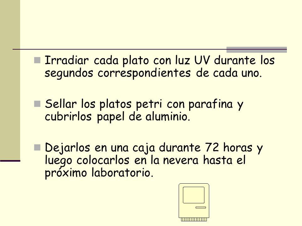 Irradiar cada plato con luz UV durante los segundos correspondientes de cada uno.