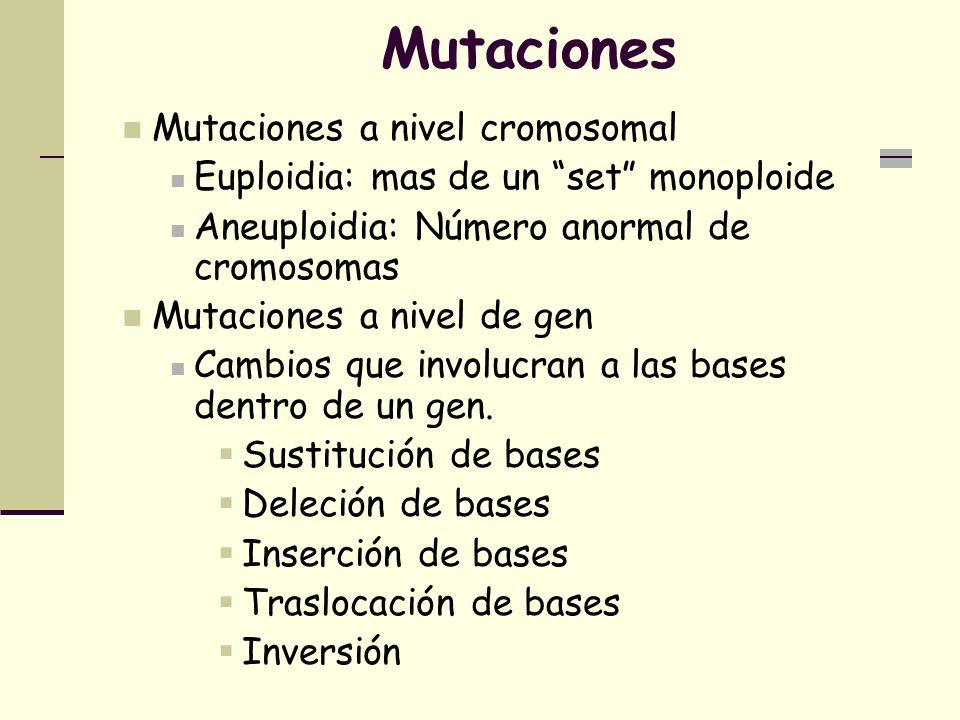 Mutaciones Mutaciones a nivel cromosomal