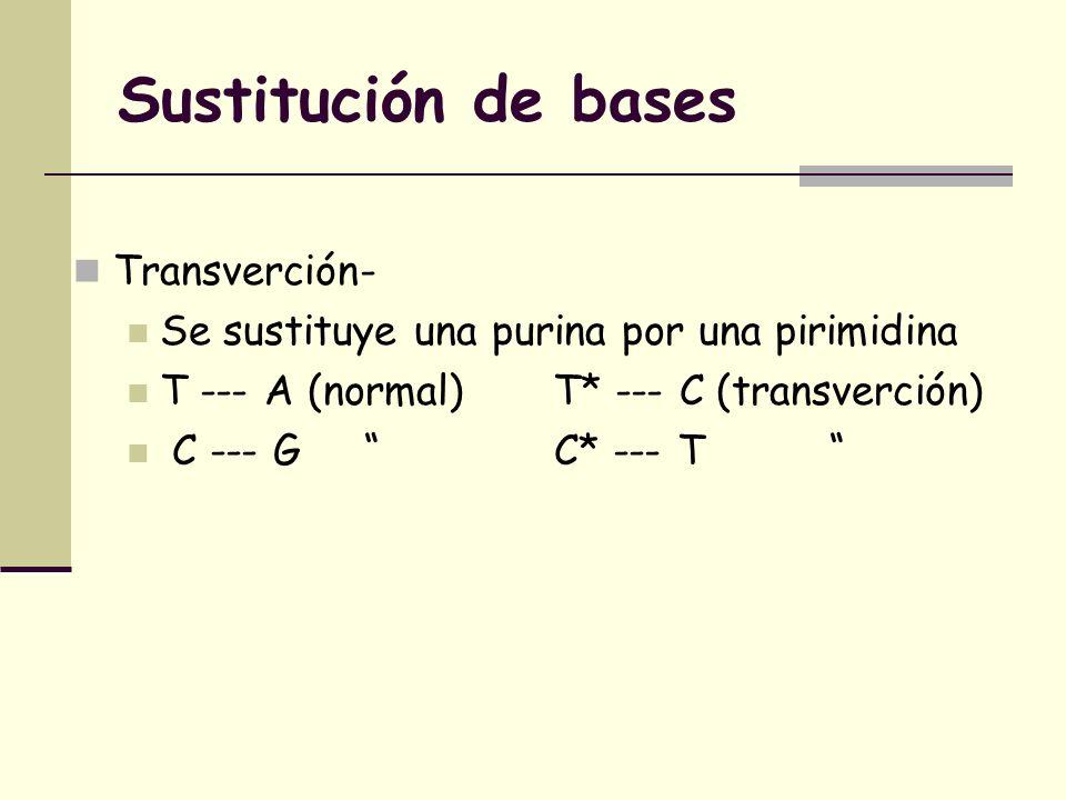 Sustitución de bases Transverción-