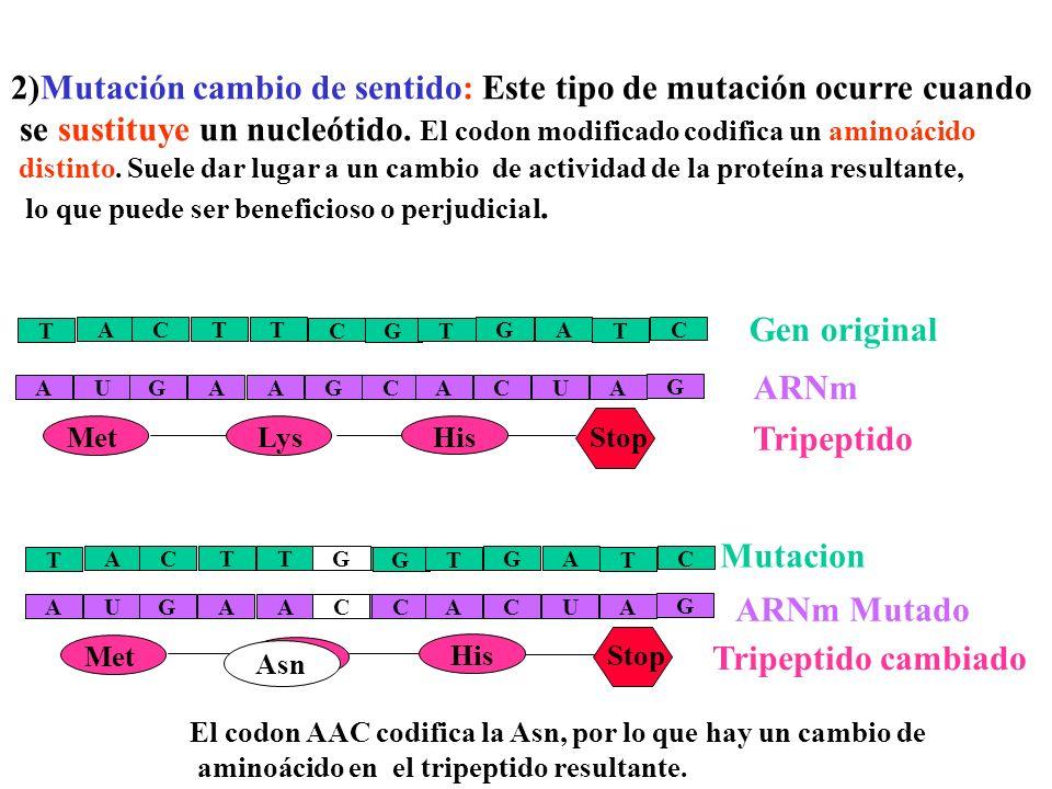 2)Mutación cambio de sentido: Este tipo de mutación ocurre cuando
