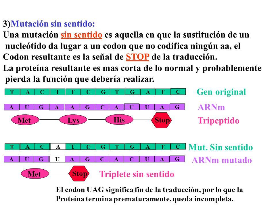 Mut. Sin sentido 3)Mutación sin sentido: