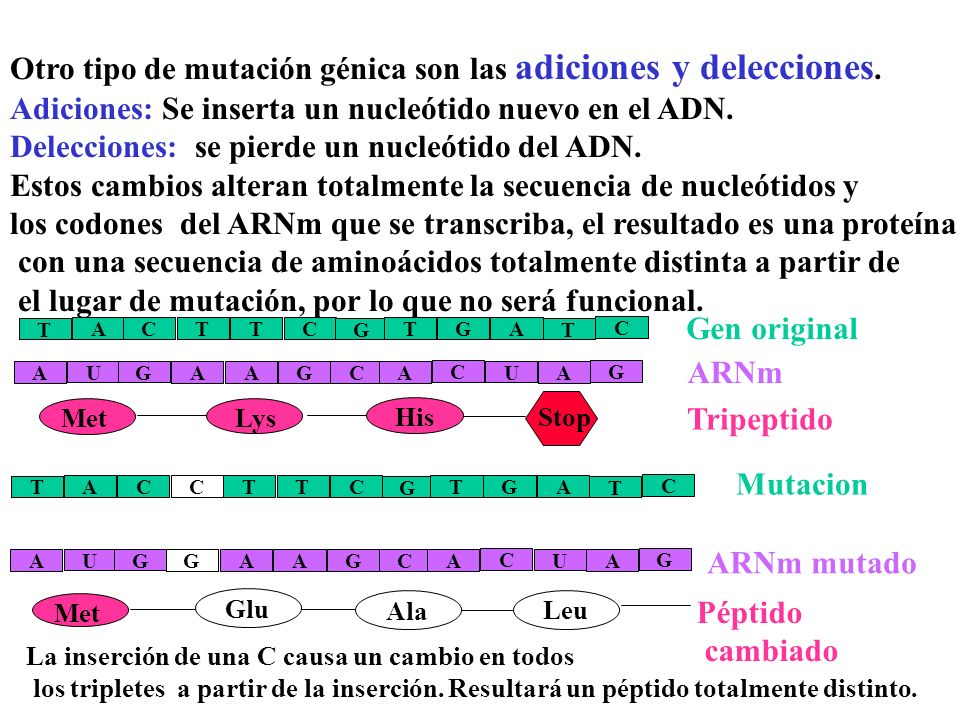 Otro tipo de mutación génica son las adiciones y delecciones.