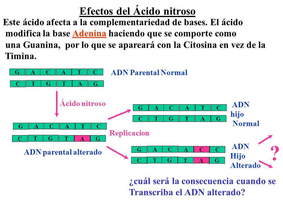Efectos del Ácido nitroso