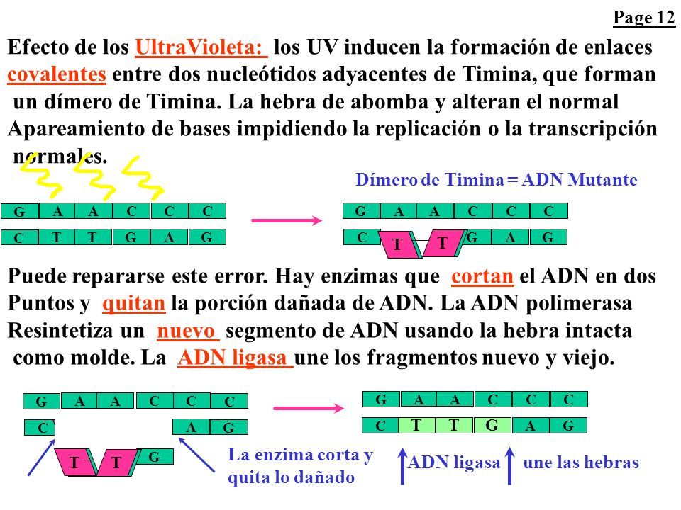 Efecto de los UltraVioleta: los UV inducen la formación de enlaces