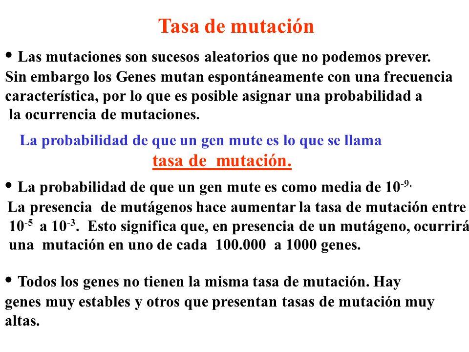 • Las mutaciones son sucesos aleatorios que no podemos prever.