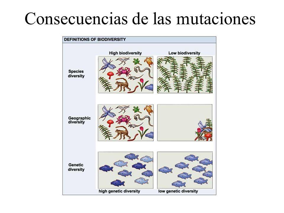 Consecuencias de las mutaciones