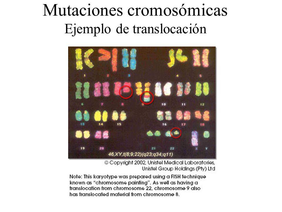 Mutaciones cromosómicas Ejemplo de translocación