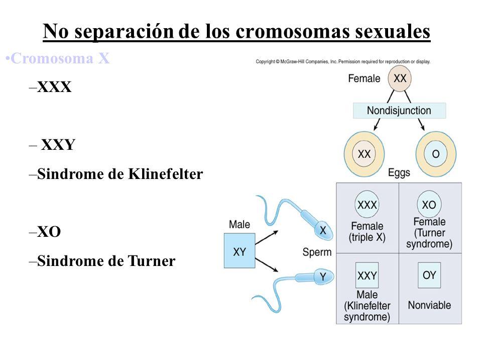 No separación de los cromosomas sexuales