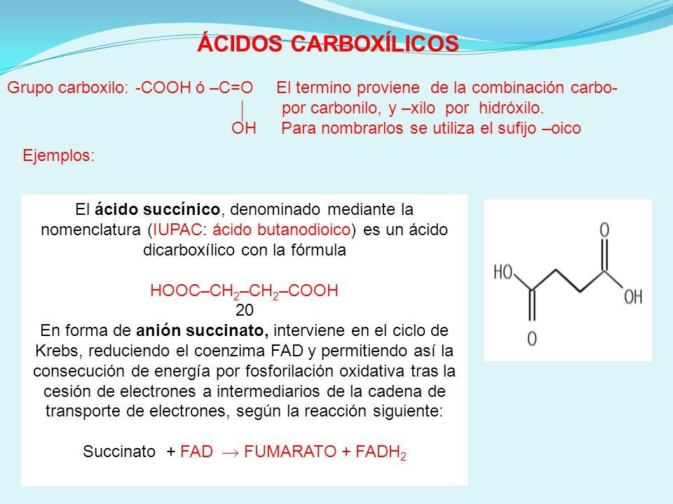 Succinato + FAD  FUMARATO + FADH2