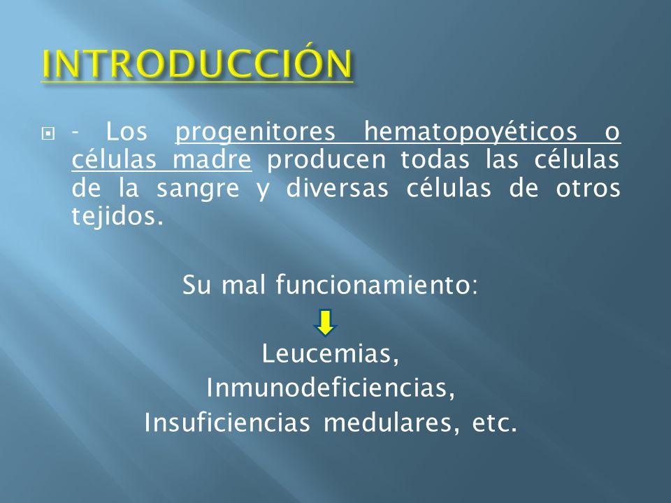 INTRODUCCIÓN - Los progenitores hematopoyéticos o células madre producen todas las células de la sangre y diversas células de otros tejidos.