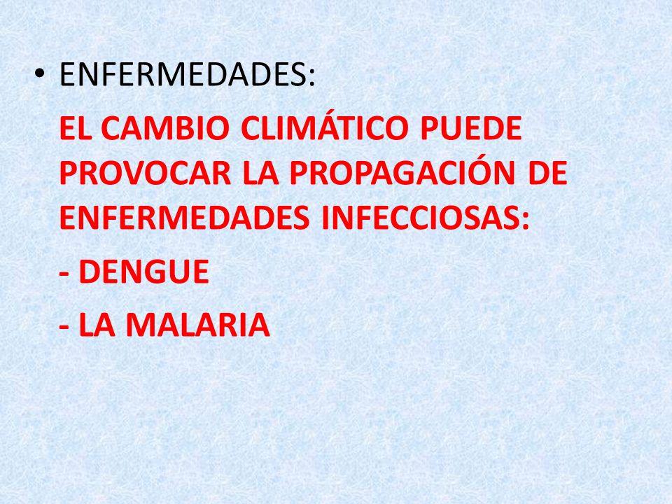 ENFERMEDADES: EL CAMBIO CLIMÁTICO PUEDE PROVOCAR LA PROPAGACIÓN DE ENFERMEDADES INFECCIOSAS: - DENGUE.