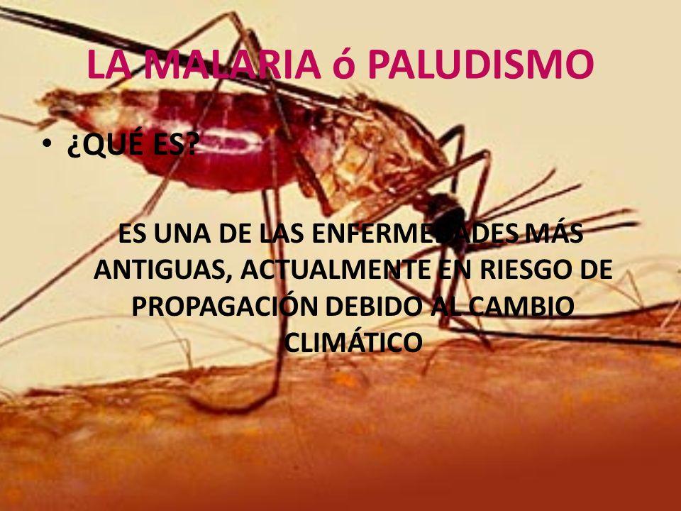 LA MALARIA ó PALUDISMO ¿QUÉ ES