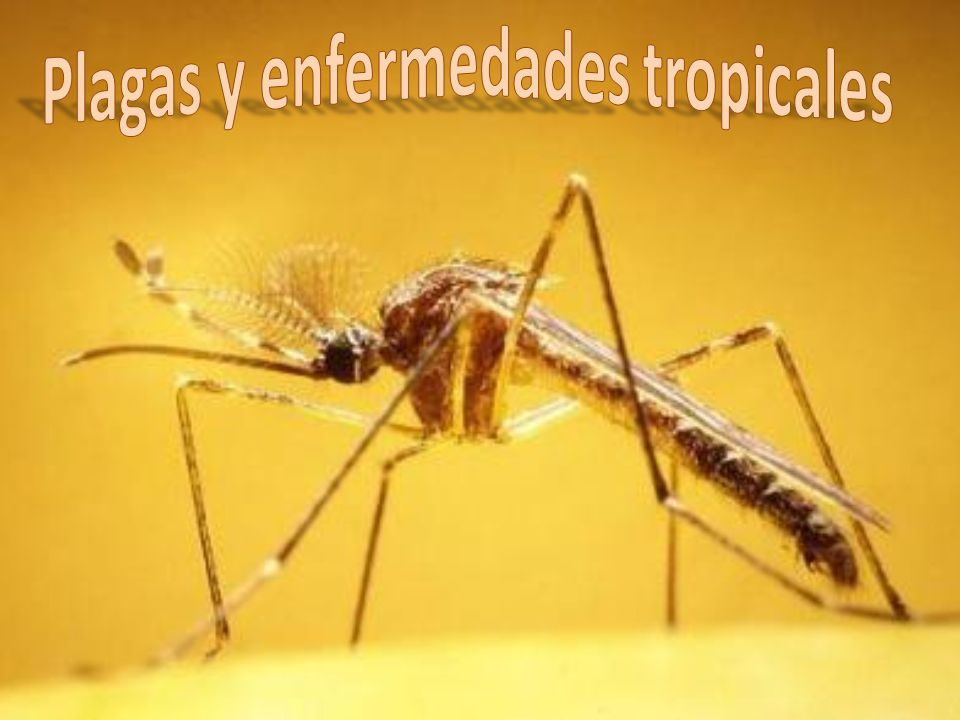 Plagas y enfermedades tropicales.