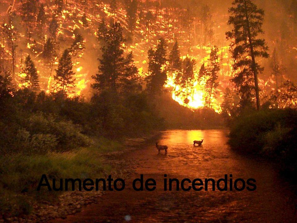 Aumento de incendios
