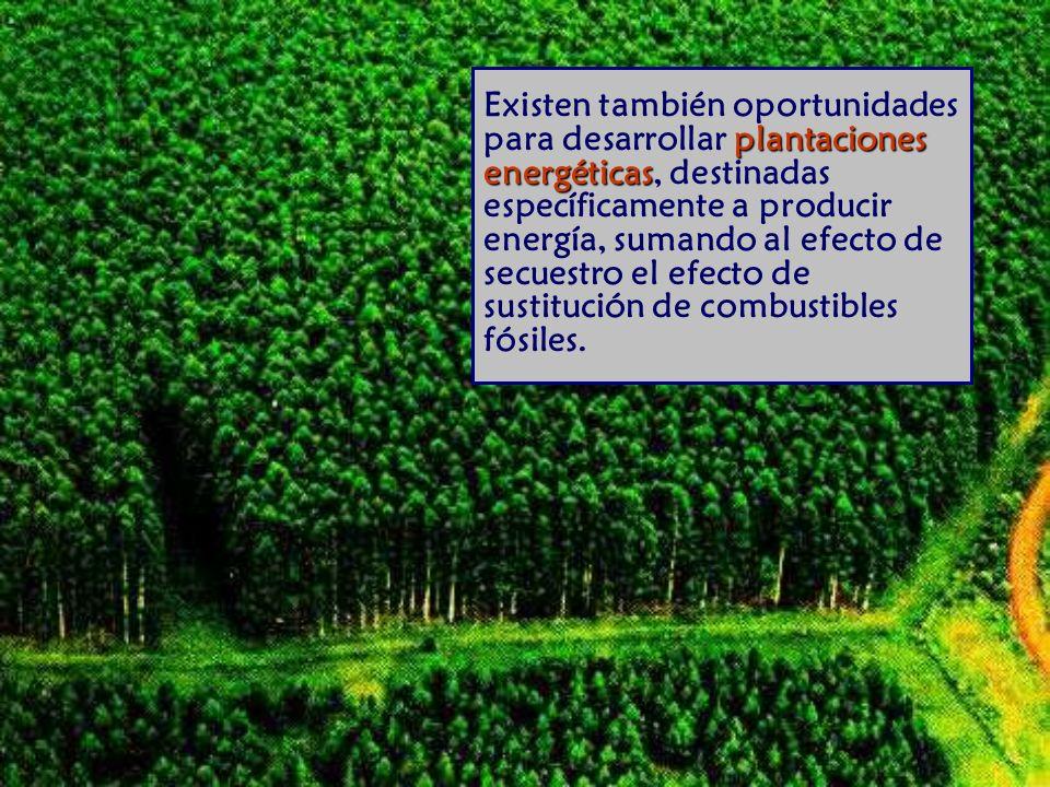 Existen también oportunidades para desarrollar plantaciones energéticas, destinadas específicamente a producir energía, sumando al efecto de secuestro el efecto de sustitución de combustibles fósiles.