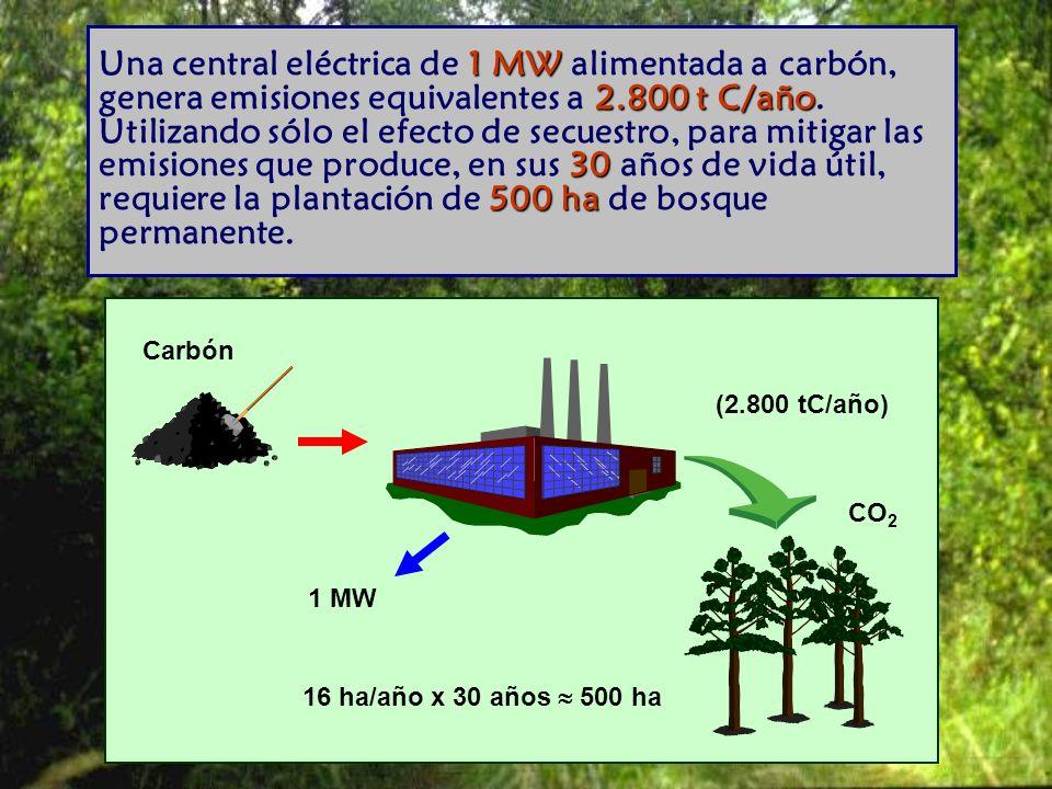 Una central eléctrica de 1 MW alimentada a carbón, genera emisiones equivalentes a 2.800 t C/año. Utilizando sólo el efecto de secuestro, para mitigar las emisiones que produce, en sus 30 años de vida útil, requiere la plantación de 500 ha de bosque permanente.