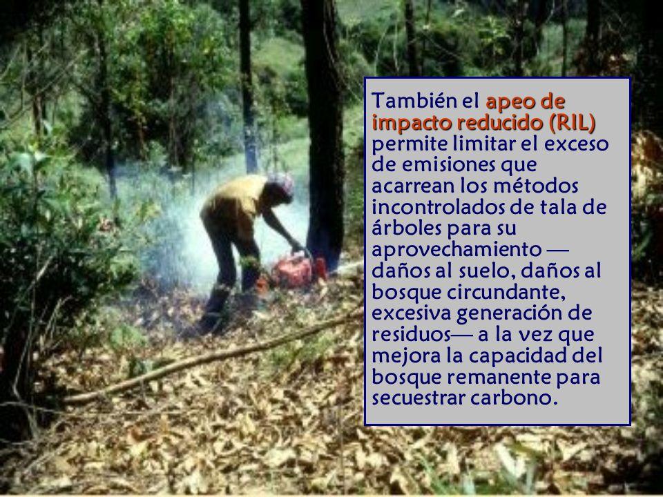 También el apeo de impacto reducido (RIL) permite limitar el exceso de emisiones que acarrean los métodos incontrolados de tala de árboles para su aprovechamiento —daños al suelo, daños al bosque circundante, excesiva generación de residuos— a la vez que mejora la capacidad del bosque remanente para secuestrar carbono.