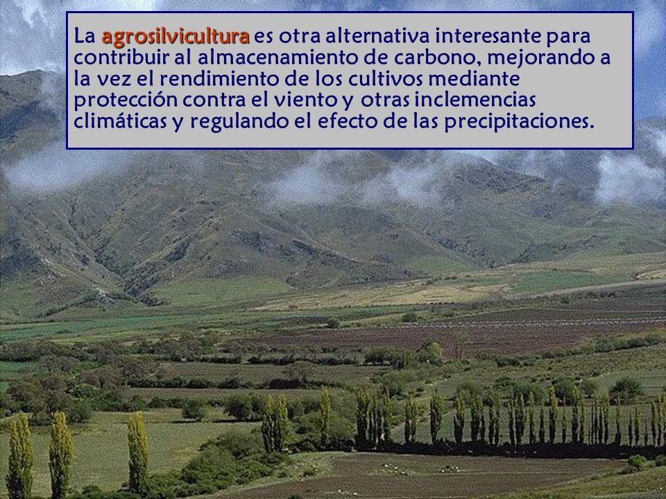 La agrosilvicultura es otra alternativa interesante para contribuir al almacenamiento de carbono, mejorando a la vez el rendimiento de los cultivos mediante protección contra el viento y otras inclemencias climáticas y regulando el efecto de las precipitaciones.