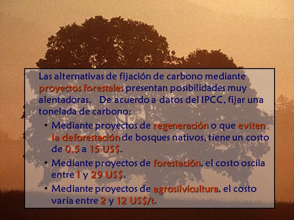 Las alternativas de fijación de carbono mediante proyectos forestales presentan posibilidades muy alentadoras. De acuerdo a datos del IPCC, fijar una tonelada de carbono: