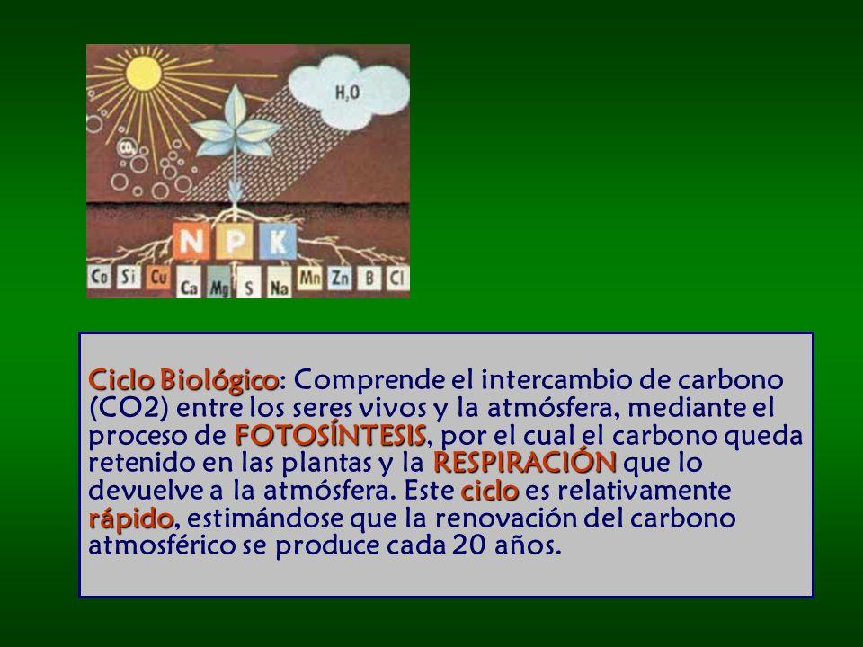Ciclo Biológico: Comprende el intercambio de carbono (CO2) entre los seres vivos y la atmósfera, mediante el proceso de FOTOSÍNTESIS, por el cual el carbono queda retenido en las plantas y la RESPIRACIÓN que lo devuelve a la atmósfera.
