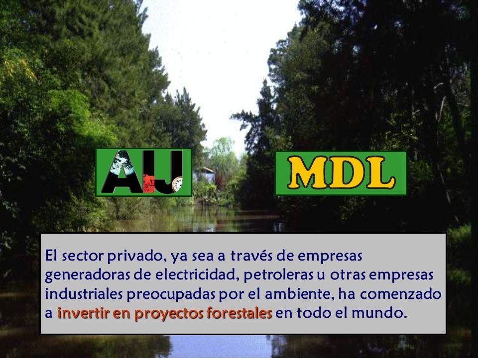 El sector privado, ya sea a través de empresas generadoras de electricidad, petroleras u otras empresas industriales preocupadas por el ambiente, ha comenzado a invertir en proyectos forestales en todo el mundo.