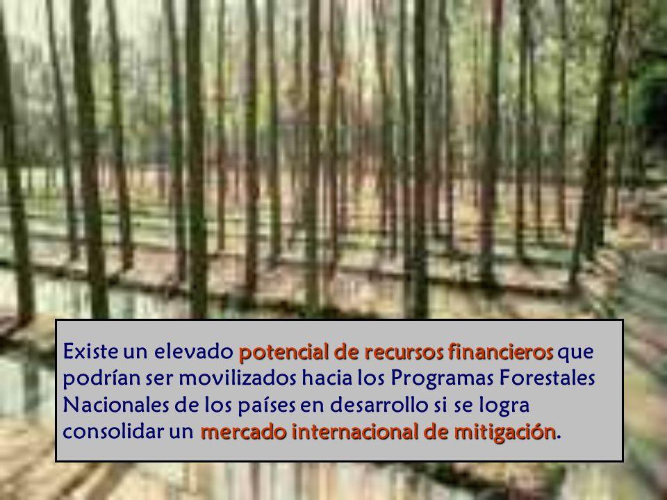Existe un elevado potencial de recursos financieros que podrían ser movilizados hacia los Programas Forestales Nacionales de los países en desarrollo si se logra consolidar un mercado internacional de mitigación.