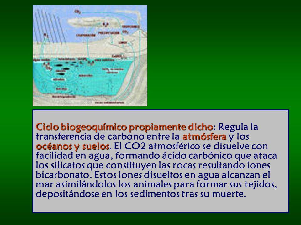Ciclo biogeoquímico propiamente dicho: Regula la transferencia de carbono entre la atmósfera y los océanos y suelos.