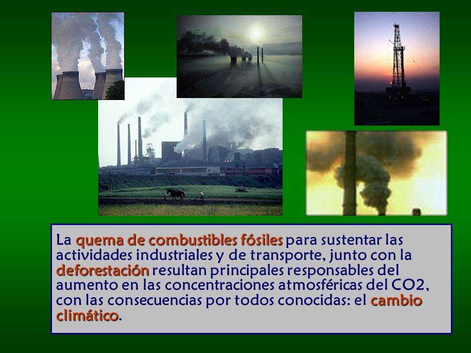 La quema de combustibles fósiles para sustentar las actividades industriales y de transporte, junto con la deforestación resultan principales responsables del aumento en las concentraciones atmosféricas del CO2, con las consecuencias por todos conocidas: el cambio climático.