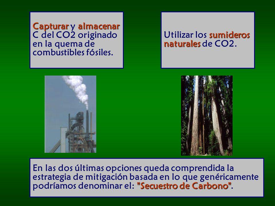 Capturar y almacenar C del CO2 originado en la quema de combustibles fósiles.