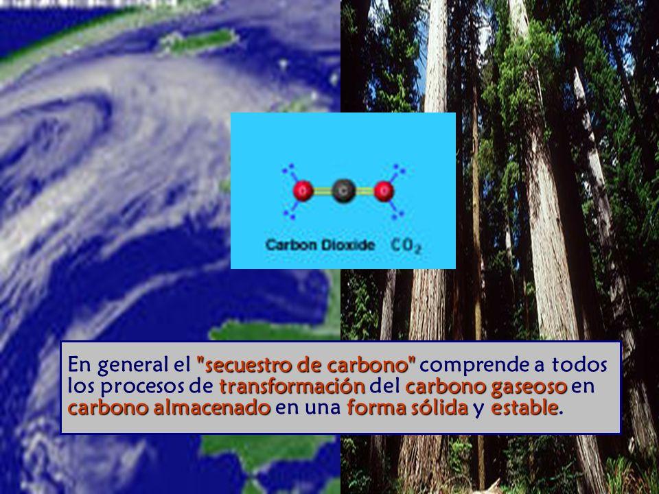 En general el secuestro de carbono comprende a todos los procesos de transformación del carbono gaseoso en carbono almacenado en una forma sólida y estable.