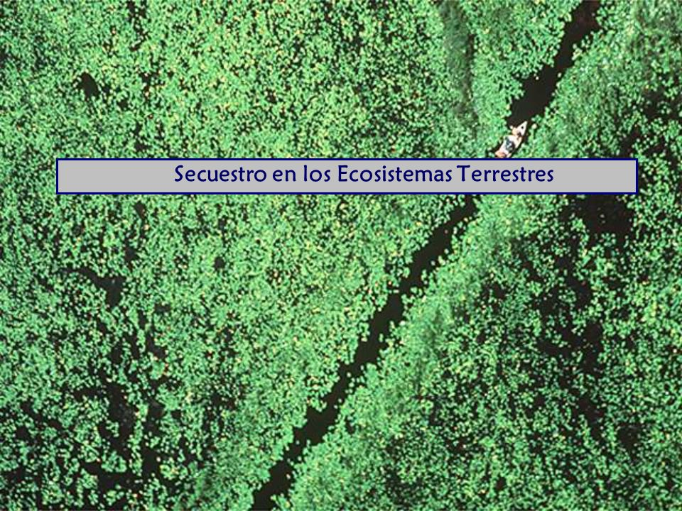 Secuestro en los Ecosistemas Terrestres