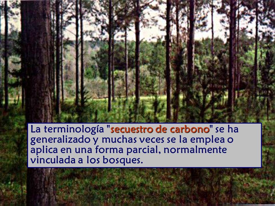 La terminología secuestro de carbono se ha generalizado y muchas veces se la emplea o aplica en una forma parcial, normalmente vinculada a los bosques.
