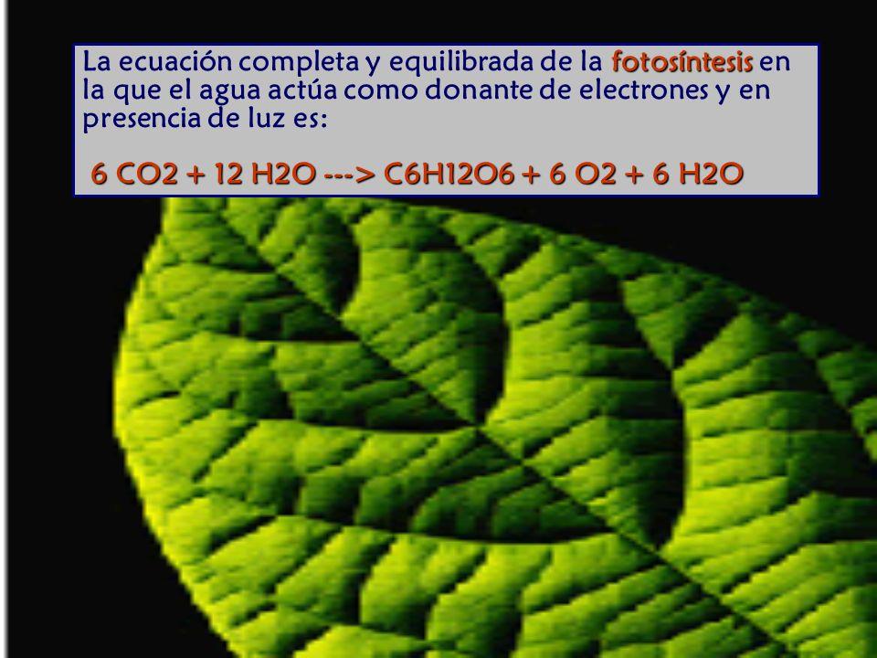 La ecuación completa y equilibrada de la fotosíntesis en la que el agua actúa como donante de electrones y en presencia de luz es: 6 CO2 + 12 H2O ---> C6H12O6 + 6 O2 + 6 H2O