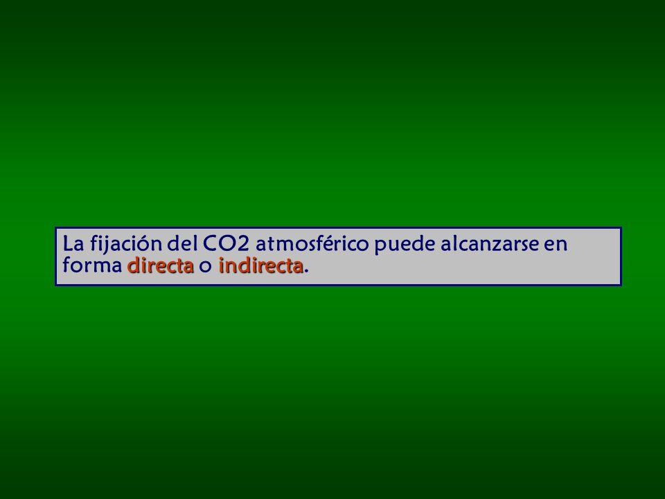 La fijación del CO2 atmosférico puede alcanzarse en forma directa o indirecta.