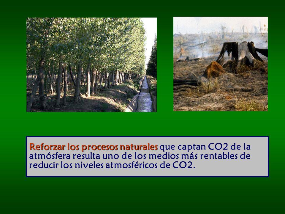 Reforzar los procesos naturales que captan CO2 de la atmósfera resulta uno de los medios más rentables de reducir los niveles atmosféricos de CO2.
