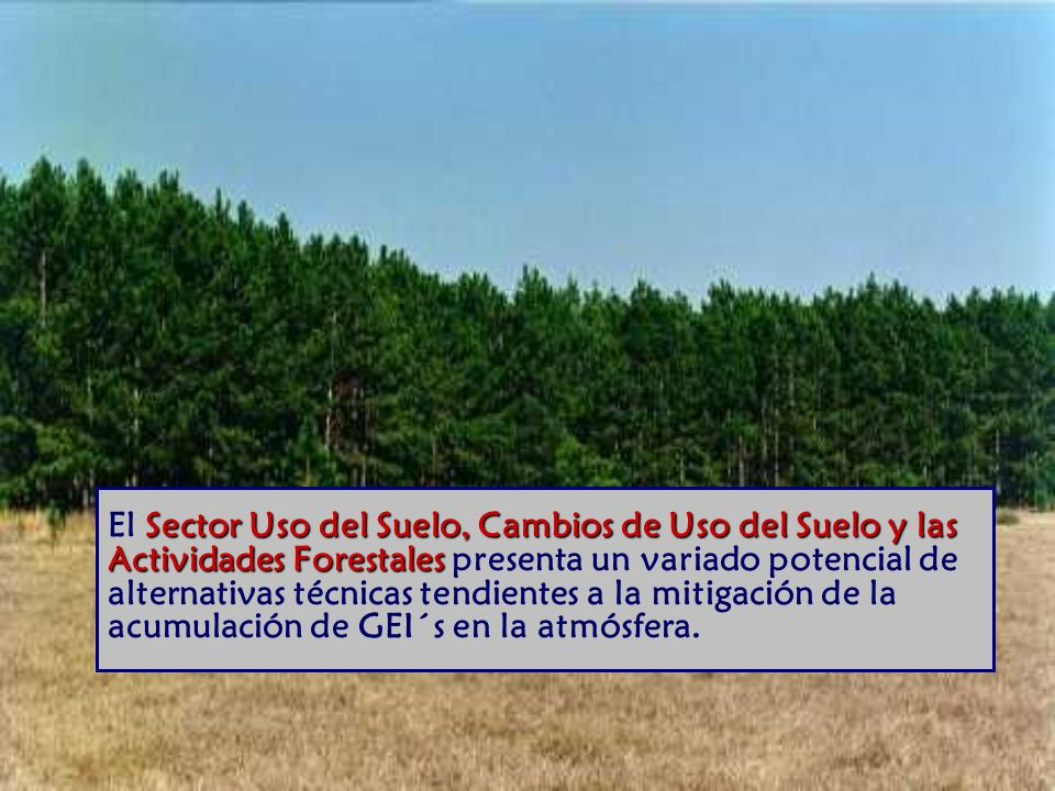 El Sector Uso del Suelo, Cambios de Uso del Suelo y las Actividades Forestales presenta un variado potencial de alternativas técnicas tendientes a la mitigación de la acumulación de GEI´s en la atmósfera.