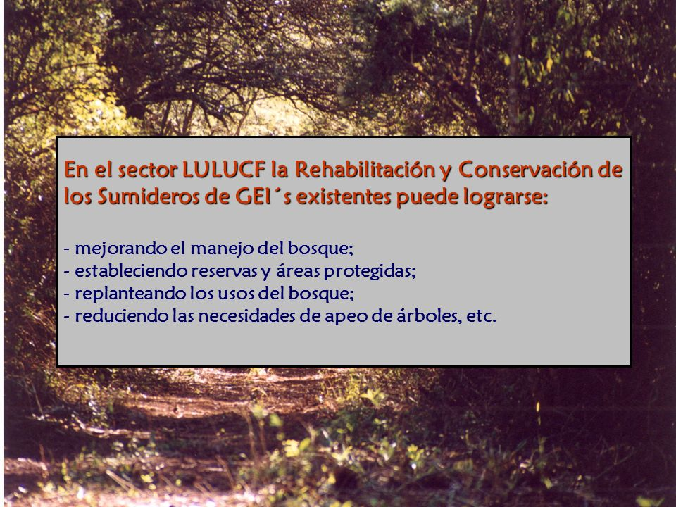 En el sector LULUCF la Rehabilitación y Conservación de los Sumideros de GEI´s existentes puede lograrse: - mejorando el manejo del bosque; - estableciendo reservas y áreas protegidas; - replanteando los usos del bosque; - reduciendo las necesidades de apeo de árboles, etc.