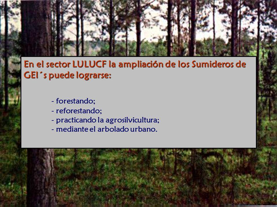 En el sector LULUCF la ampliación de los Sumideros de GEI´s puede lograrse: - forestando; - reforestando; - practicando la agrosilvicultura; - mediante el arbolado urbano.