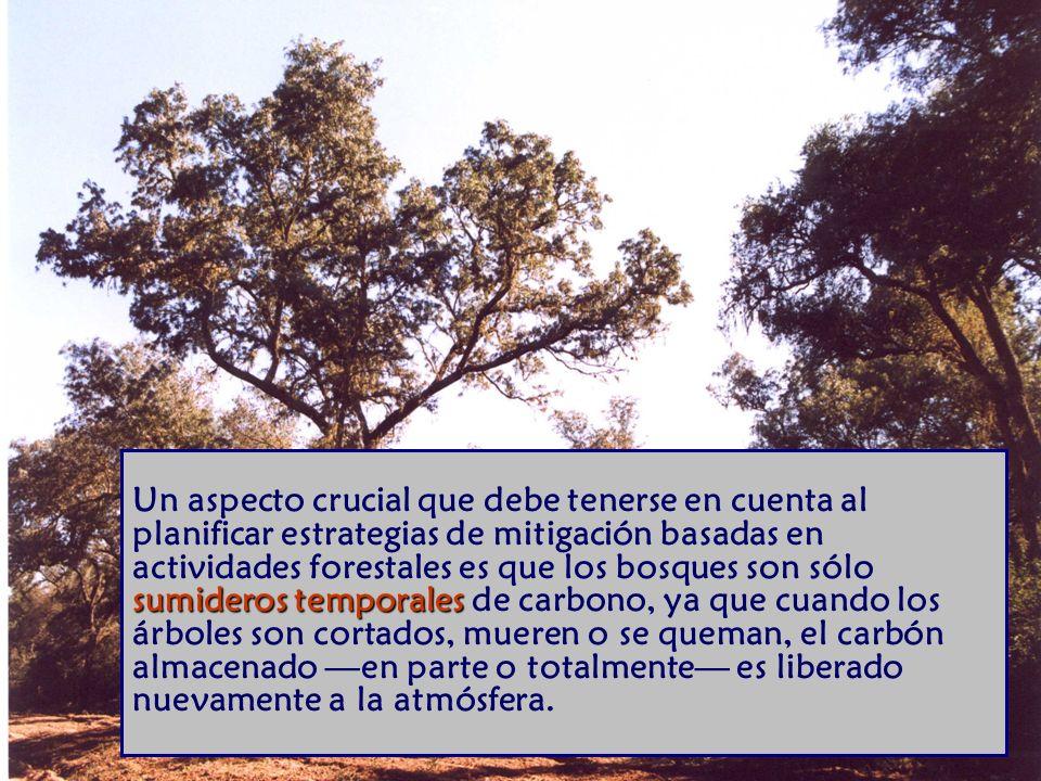 Un aspecto crucial que debe tenerse en cuenta al planificar estrategias de mitigación basadas en actividades forestales es que los bosques son sólo sumideros temporales de carbono, ya que cuando los árboles son cortados, mueren o se queman, el carbón almacenado —en parte o totalmente— es liberado nuevamente a la atmósfera.