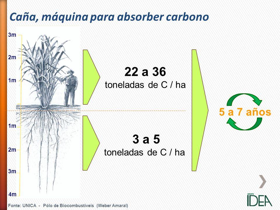 Caña, máquina para absorber carbono
