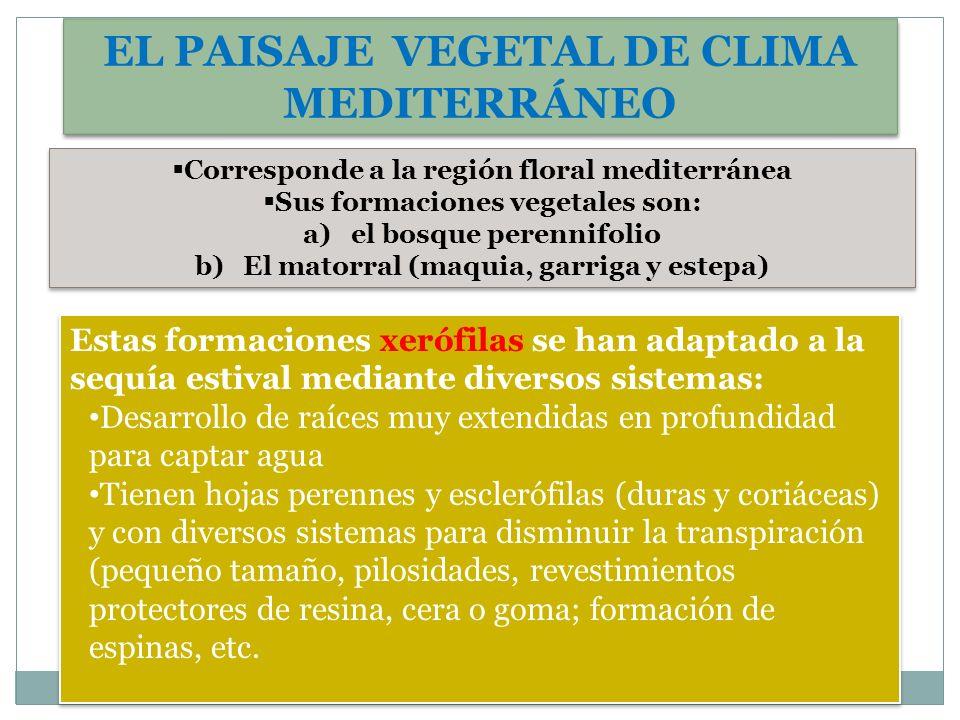 EL PAISAJE VEGETAL DE CLIMA MEDITERRÁNEO