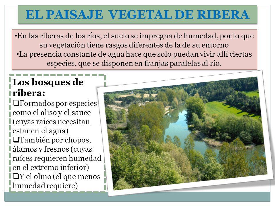 EL PAISAJE VEGETAL DE RIBERA