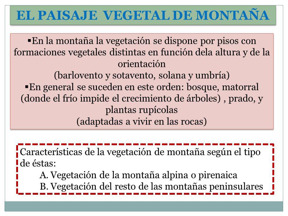 EL PAISAJE VEGETAL DE MONTAÑA