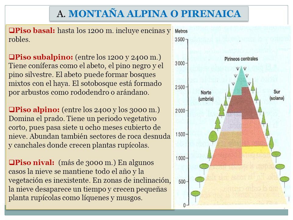 A. MONTAÑA ALPINA O PIRENAICA