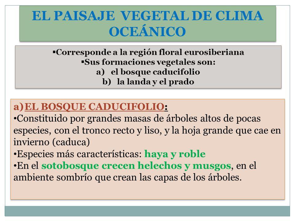 EL PAISAJE VEGETAL DE CLIMA OCEÁNICO