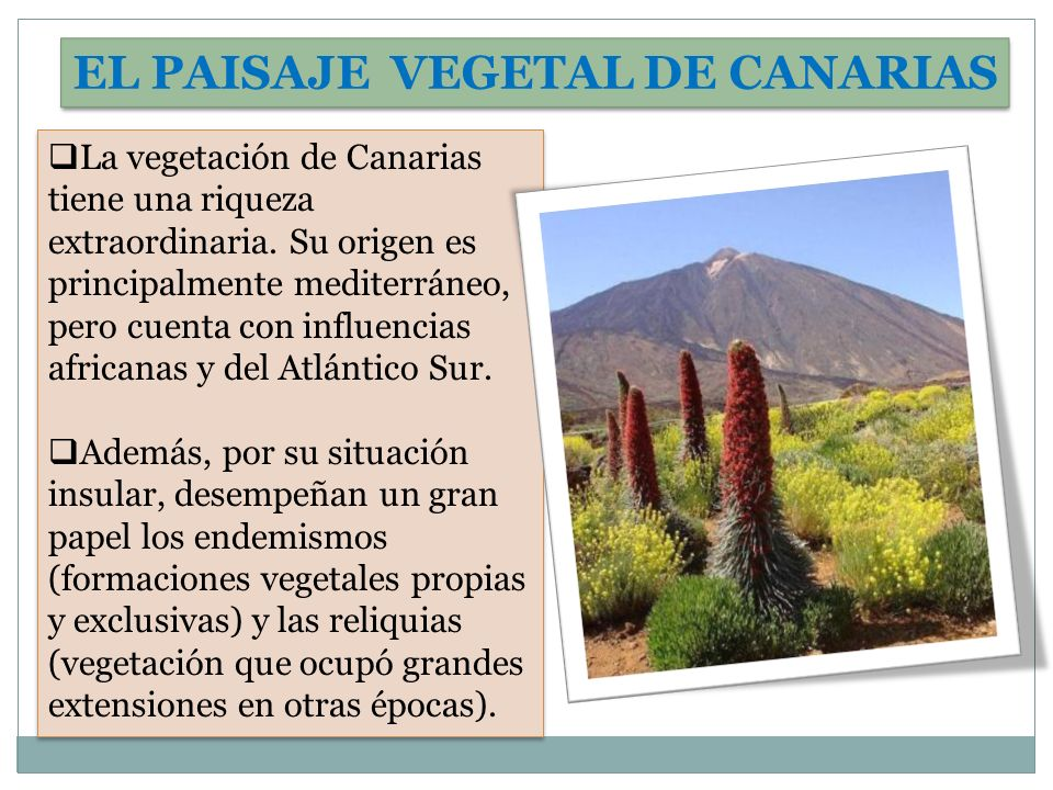 EL PAISAJE VEGETAL DE CANARIAS