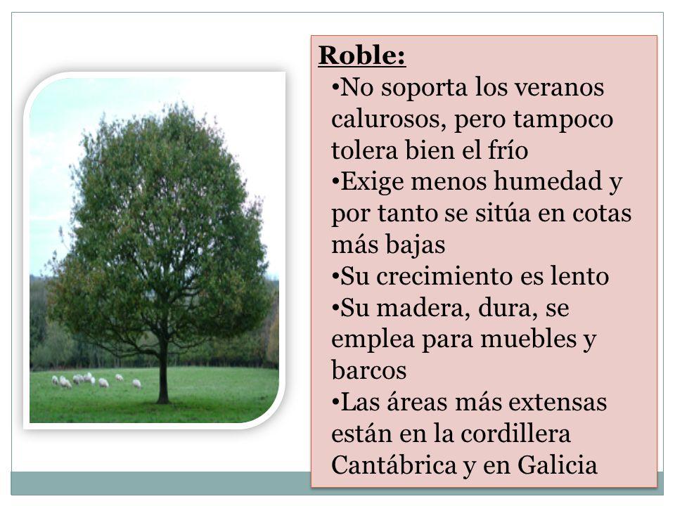 Roble: No soporta los veranos calurosos, pero tampoco tolera bien el frío. Exige menos humedad y por tanto se sitúa en cotas más bajas.