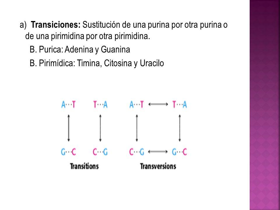 a) Transiciones: Sustitución de una purina por otra purina o de una pirimidina por otra pirimidina.
